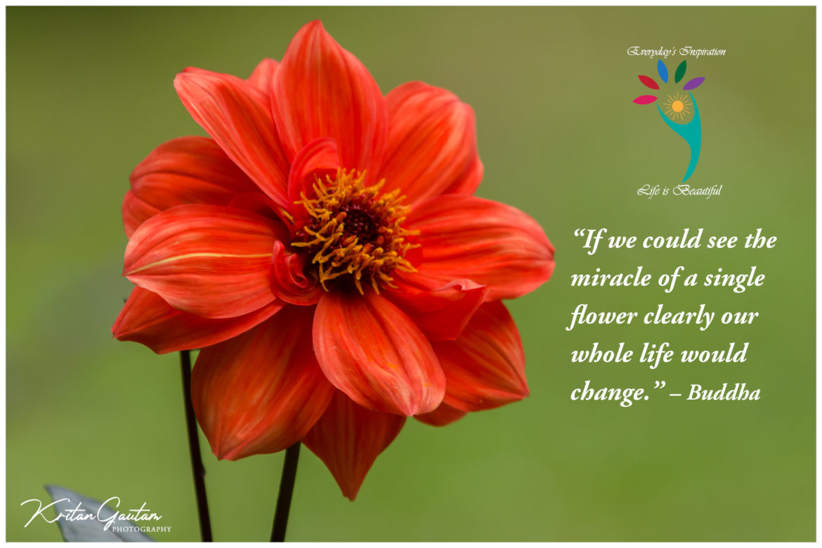 """If we could see the miracle of a single flower clearly our whole life would change.""- Buddha"